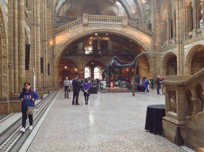 Natural history museum, great hall, London