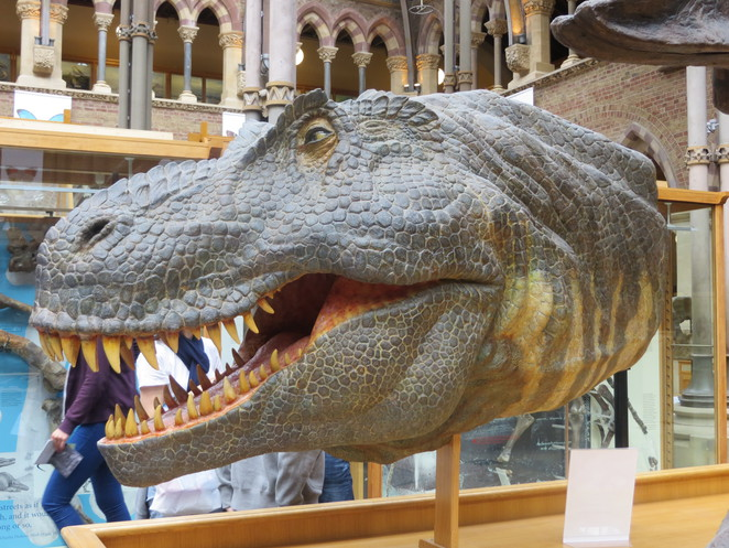dinosaur, head, oxford, museum, natural, history