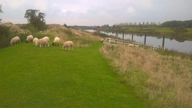 Heron Arm, Countryside pub, sheep, views, The Great River Ouse, walkers, The Fens, Stowbridge pub, pubs, public house, old farmhouse,